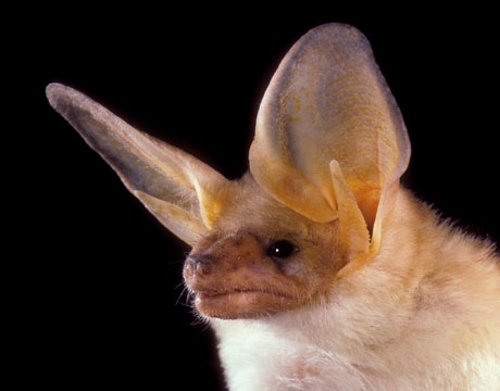 Facts About Bats  Pictures of Bats  The Daily Green