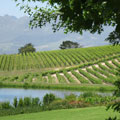 Sustainable South African Wines